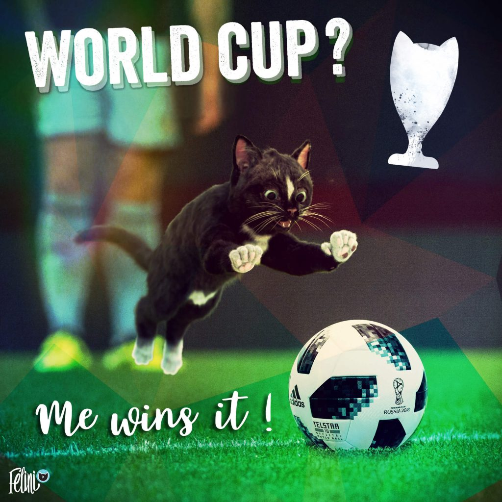 Funny Cat Felini plays at the FIFA world cup 2018