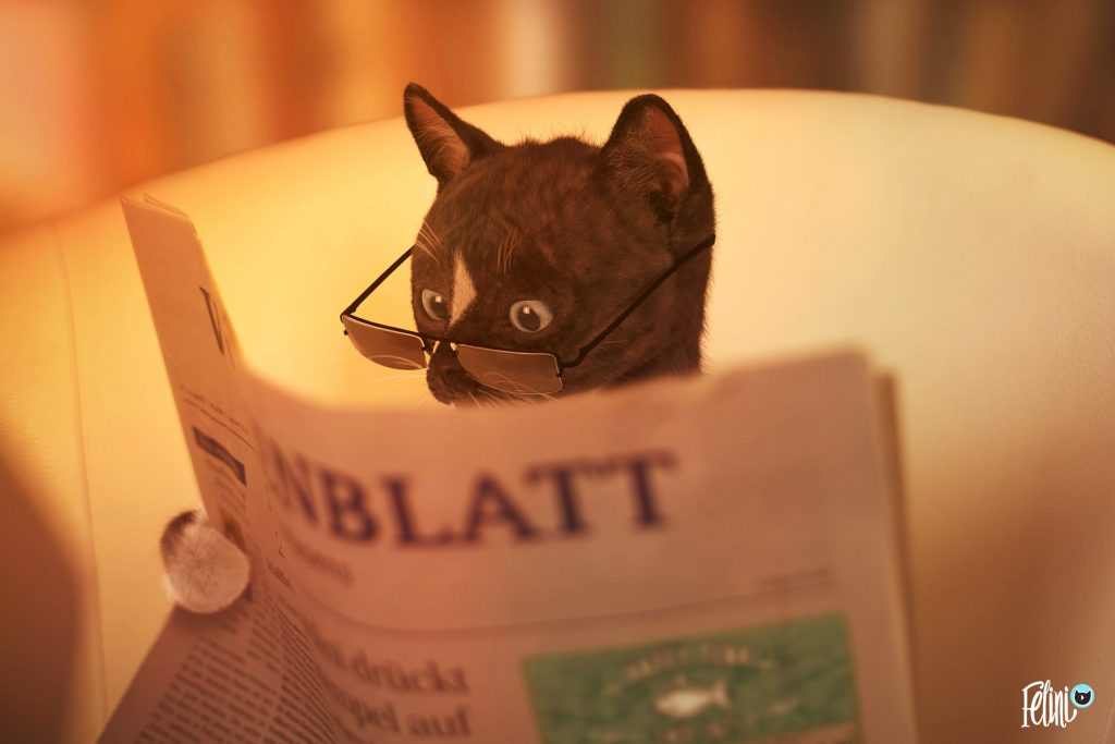 Felini funny cat reads newspaper article on politics