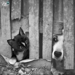 Felini funny cat looks at dog through fence