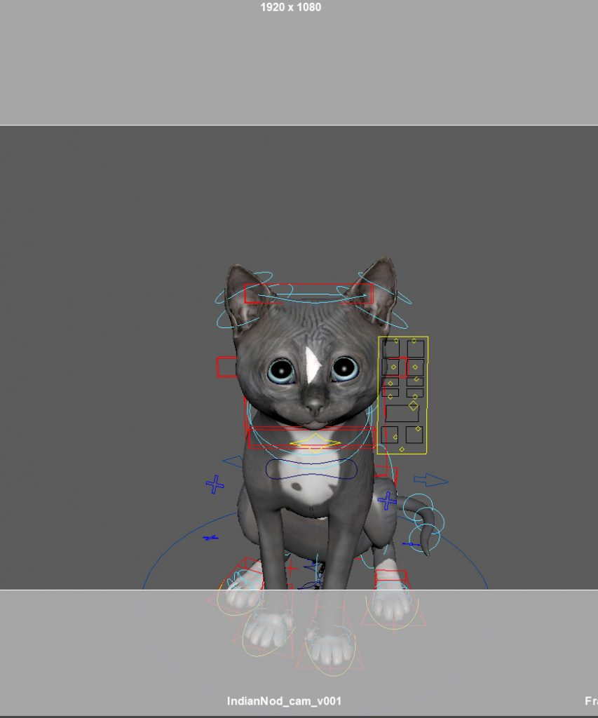 cute adorable kitten Felini looking up in this viewport preview