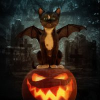 Felini =^oo^= ~ Happy Meoween – Video