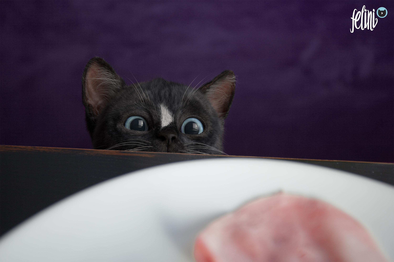 Felini =^..^= ~ Ham Nom Nom ?