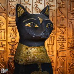 Felini the funny cat as Egyptian God