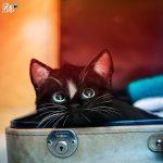 Felini =^..^= ~ Cute Cat in Suitcase