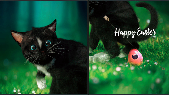 LUT color preview of Felini cat animation - for funny cat easter greetings. Happy Easter!