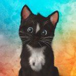 Felini =^..^= ~ Cute & Colorful, Beautiful Kitten